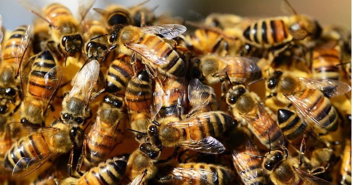 Study: Bee venom kills aggressive breast cancer cells