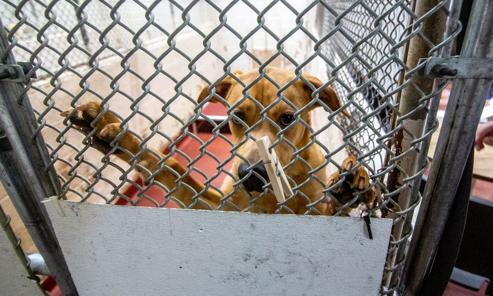 Local animal shelters at capacity, offering free adoptions through Sunday